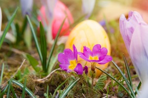 easter-674212_1280
